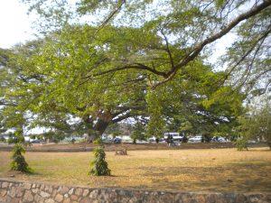 01-pianta-bujumbura